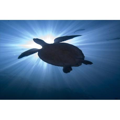 Magic Turtle Squares