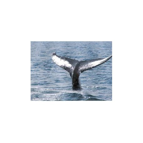 How Whales Hear