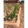Waffle Gardens: Sustaining Life in the Desert